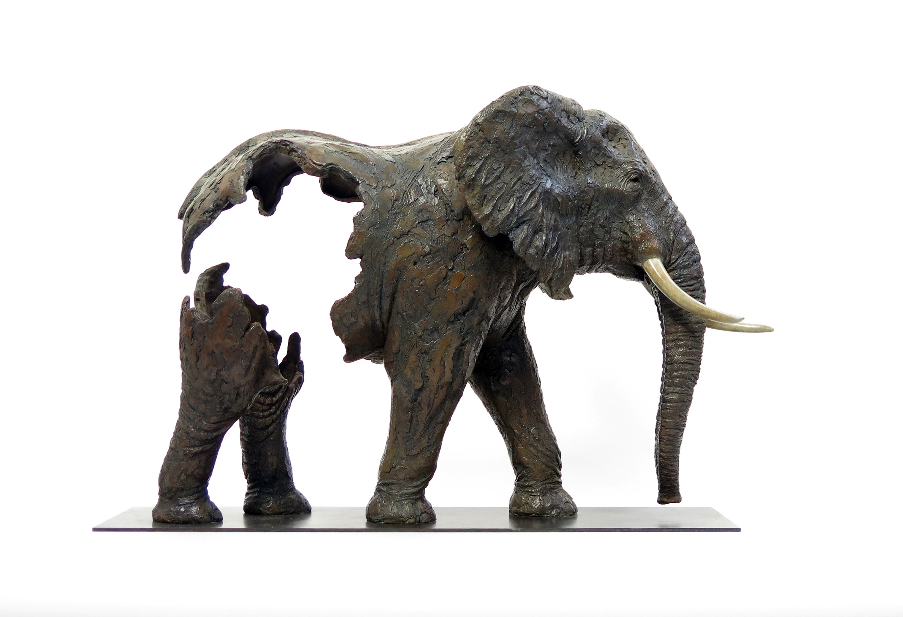 Cameroun Elephant bronze PJ CHABERT 2 HD