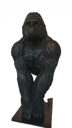 Gorille de face