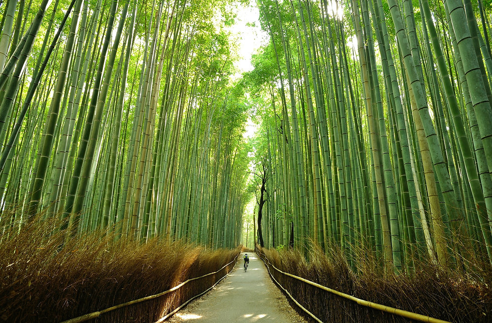 Cycling through bamboo forest.jpg