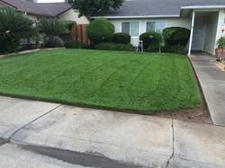 Full Lawn Maintenance
