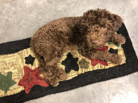 Jellly testing out a rug