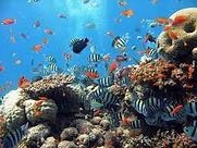cozumel reef web pic.jpg