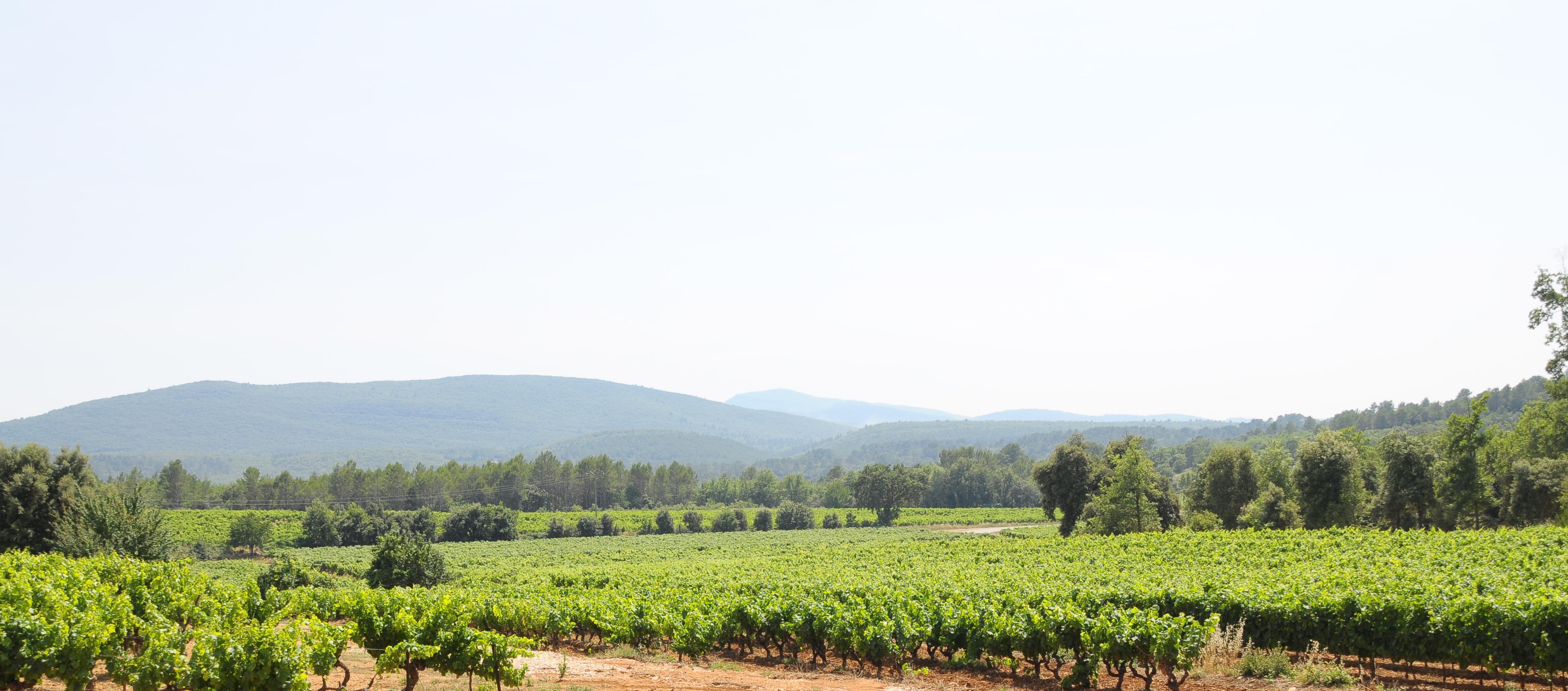 Wijngaarden van Cabasse