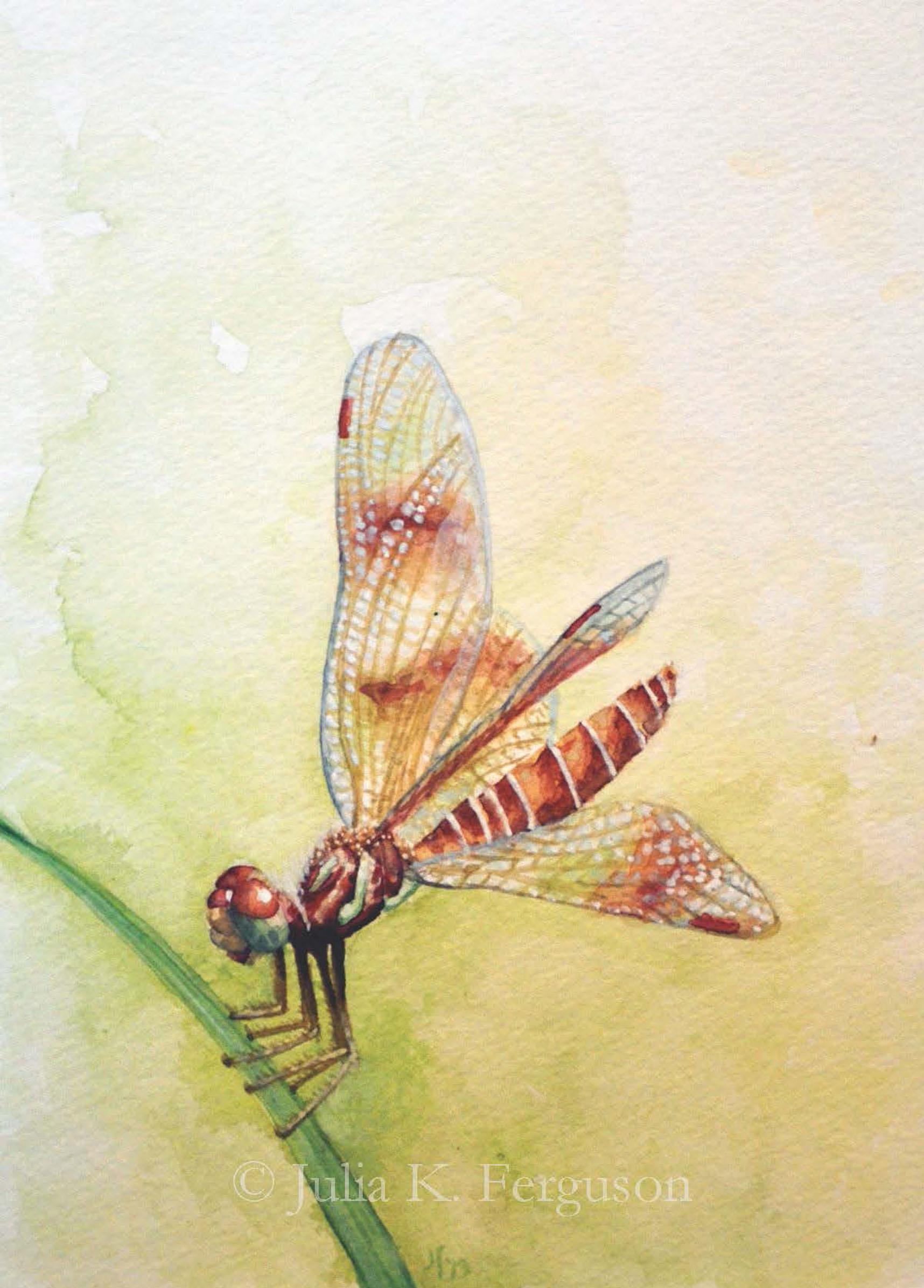 Amberwing