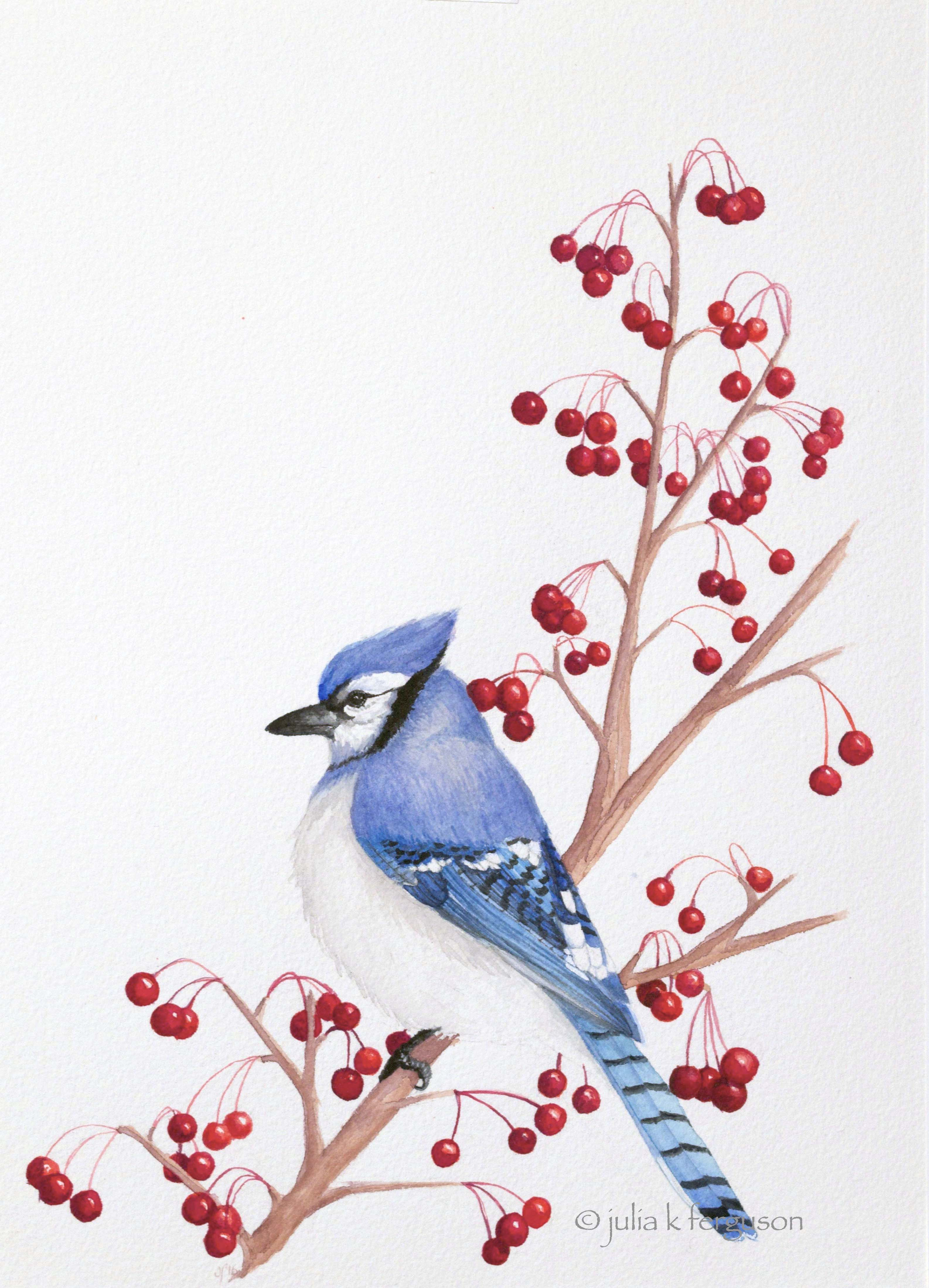 Blue Jay on Crabapple