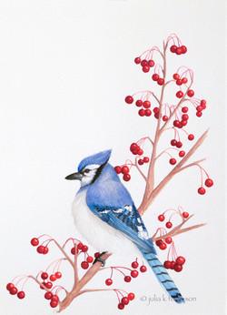Blue Jay on Crabapple