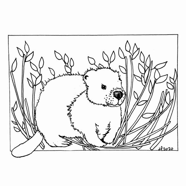 Baby Beaver.jpg
