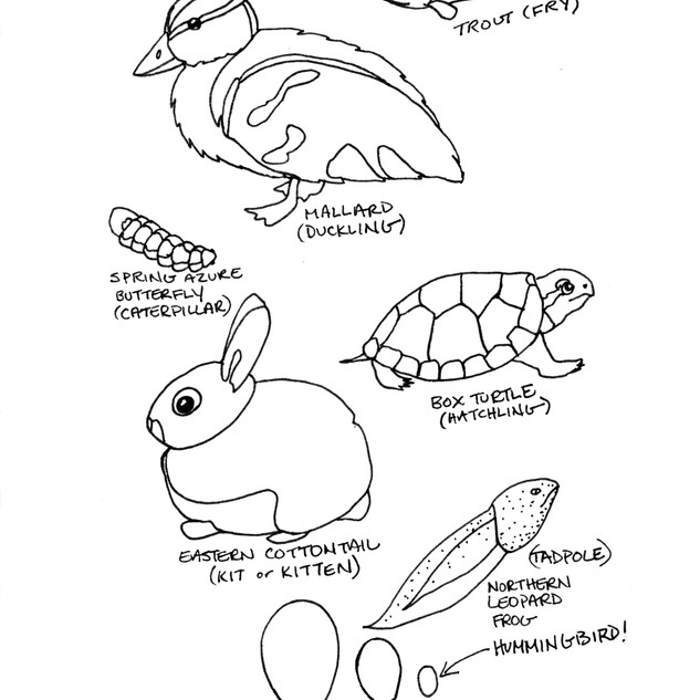 Baby Animals Coloring Page.jpg