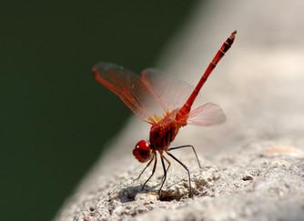 Picaduras de insectos, ¿qué hacer?