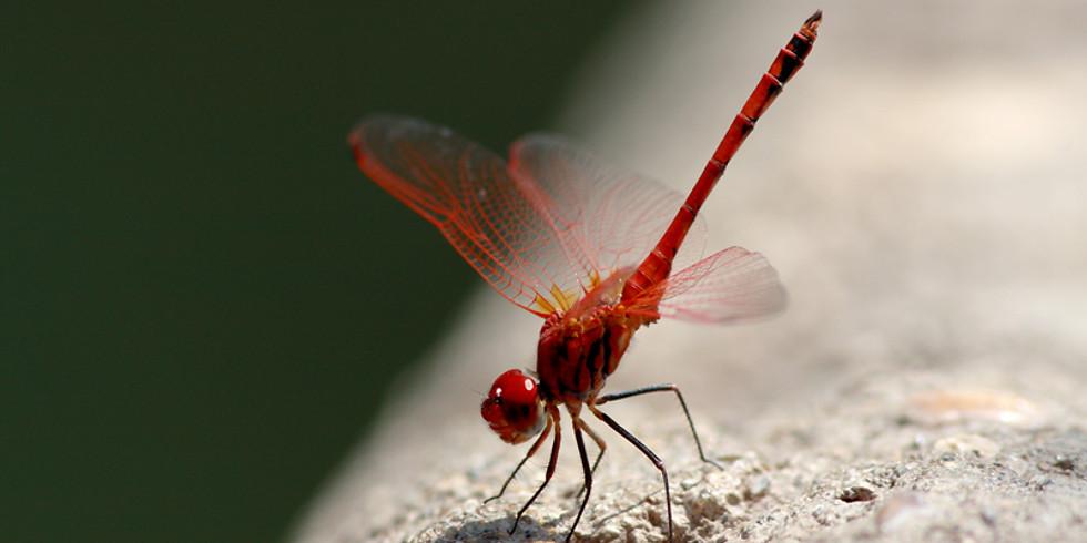 Ijams: Dragonfly Olympics (Family Program)