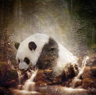 Pandamoneum