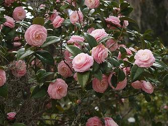 pinkcam.jpg