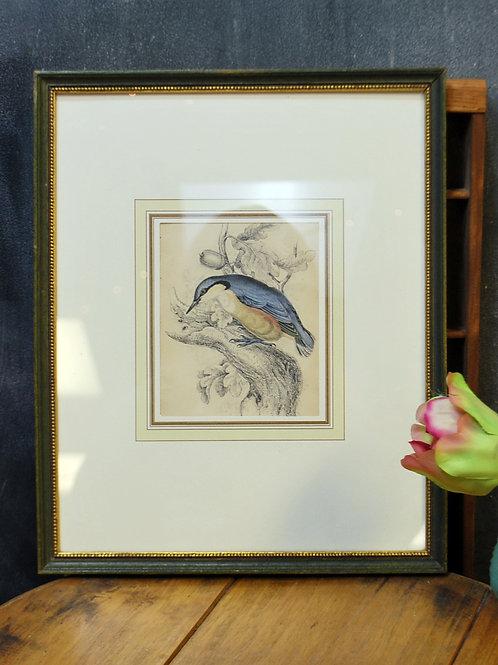 Framed Bird Prints (Set of 2)