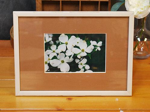Framed Dogwood Photograph