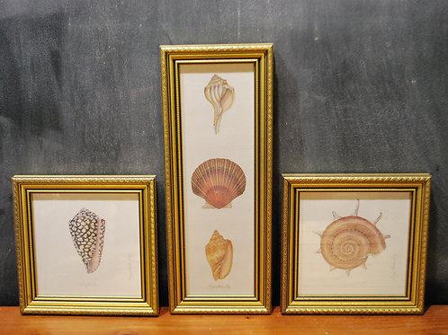 Seashell Prints by Karyn Frances Gray