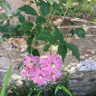 Vine Cottage Garden