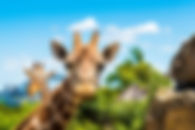 Taronga Zoo Strategic Business Case