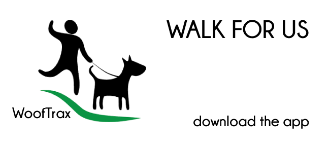 Raise Money While Walking Your Dog