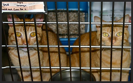 Cats adopted from the Humane Society of Port Jervis/Deerpark