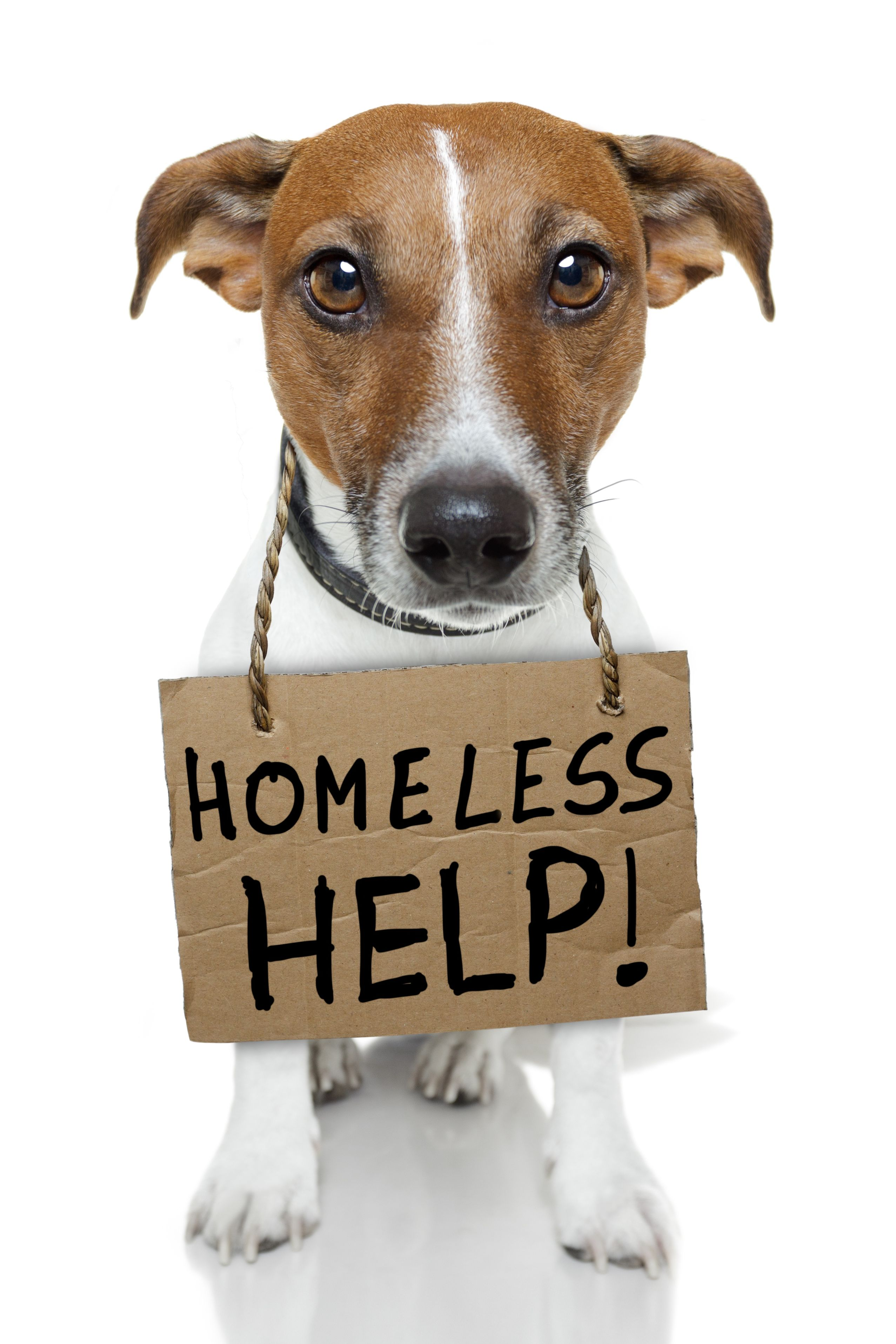 Help Homeless Pets
