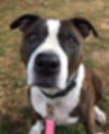 Adopt a dog from the Humane Society of Port Jervis/Deerpark