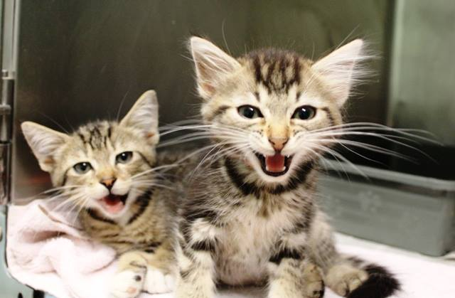Help Cats & Kittens in Need