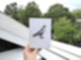 web pigeon1.jpg