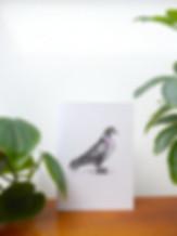 web pigeon3.jpg