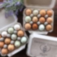 TLA eggs 1_edited.jpg