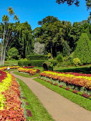 Peradeniya Botanical Garden.jpg
