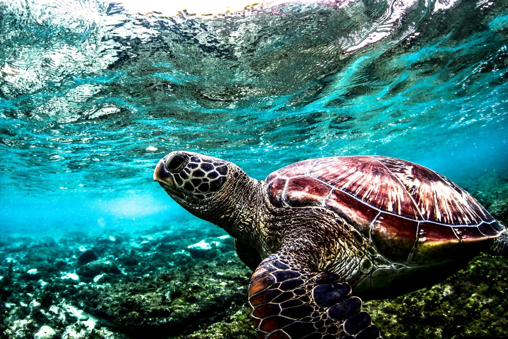 turtle-day1.jpg