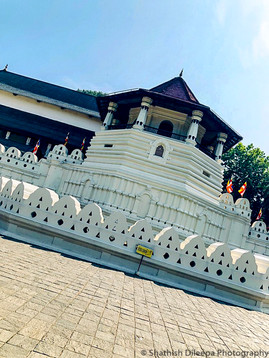 Kandy Tooth Relic Beauty.jpg