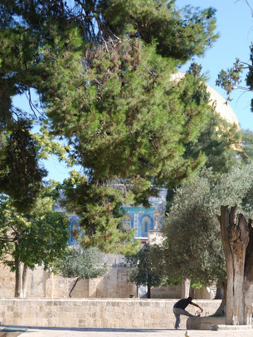Gerusalemme Spianata delle moschee