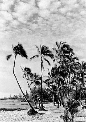 Hawaiian Sway
