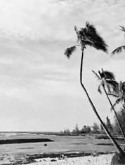 Hawaii Dreaming Trees #2