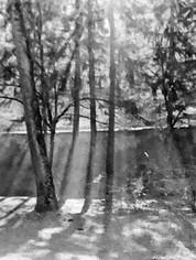 Through the Innsbrook Trees