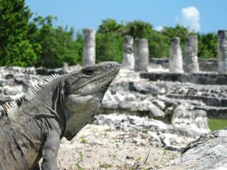 vacaciones-en-cancun-el-rey-sitio-arqueo