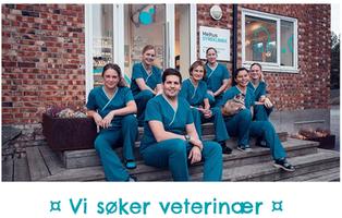 Ledig stilling som veterinær