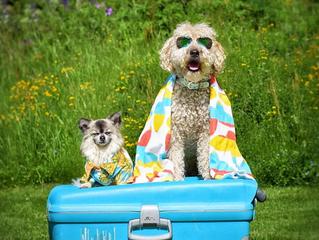 Ferieplaner med hund?