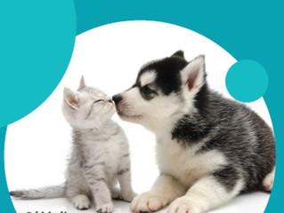 HJELP, tannpuss??!   -Hvordan pusse tenner hos hund og katt?