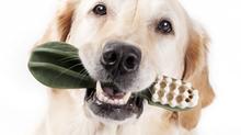 Tannhelse hos hund og katt