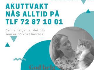 Dyrlegevakt i Trondheim og omegn