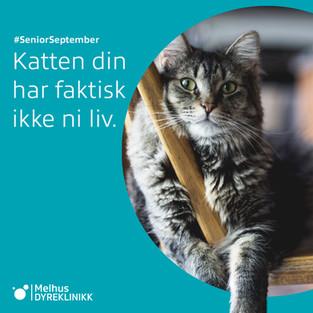 9 viktige råd for kattens helse