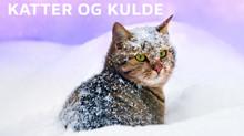 Når er det for kaldt ute for katten?