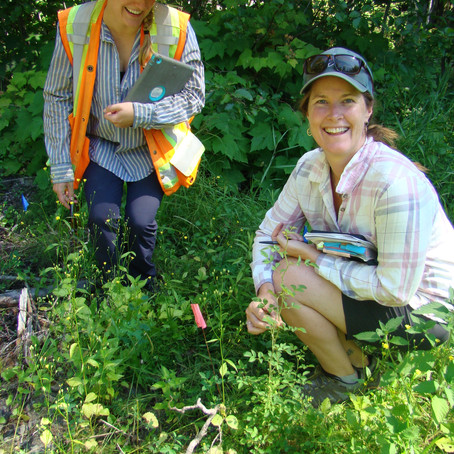 Routing out invasive plant species: we C-KISS and tell!