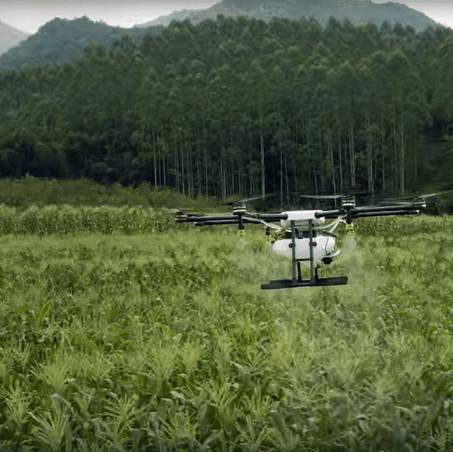 Sector agroforestal