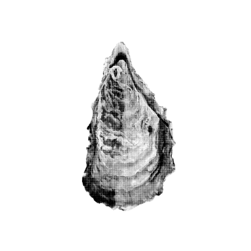 Oesters_1.png