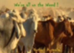 cattle 1 (3).jpg