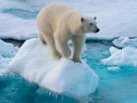 Oso Polar: origen, ¿Qué es? características, hábitat y más.