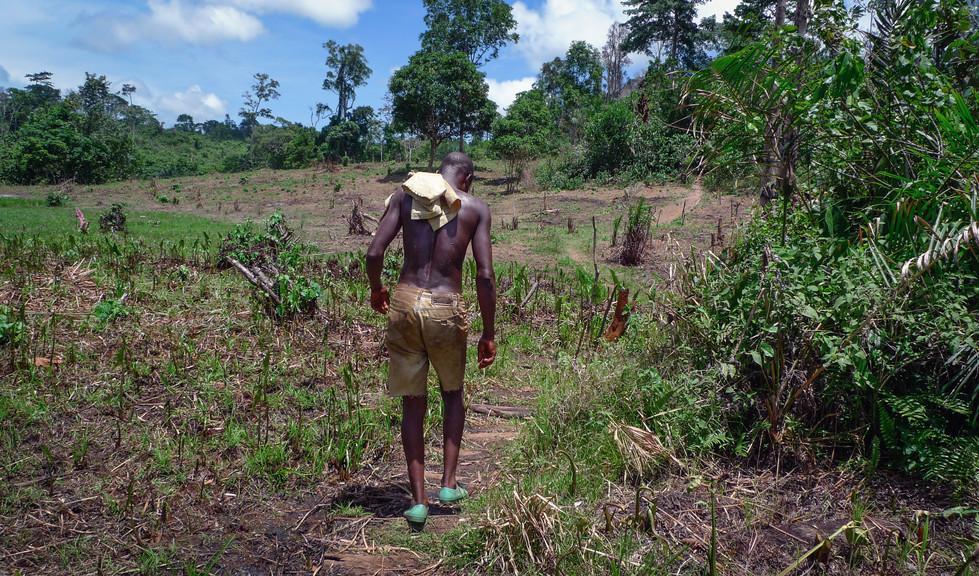 Ouvrier sur les cultures de Séraphin, route Abidjan-Sassandra, Côte d'Ivoire